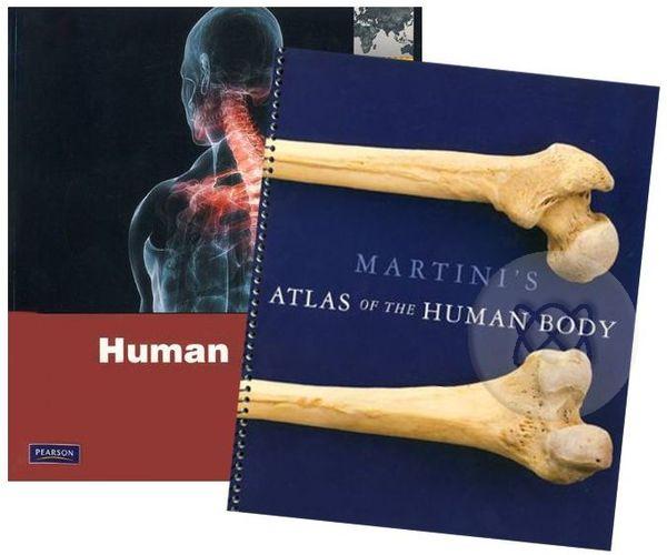 Human Anatomy 7ed Martinis Atlas Of The Human Body P